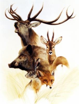 Blog de mister sanglier page 78 mister sanglier24 - Dessin de chasse ...
